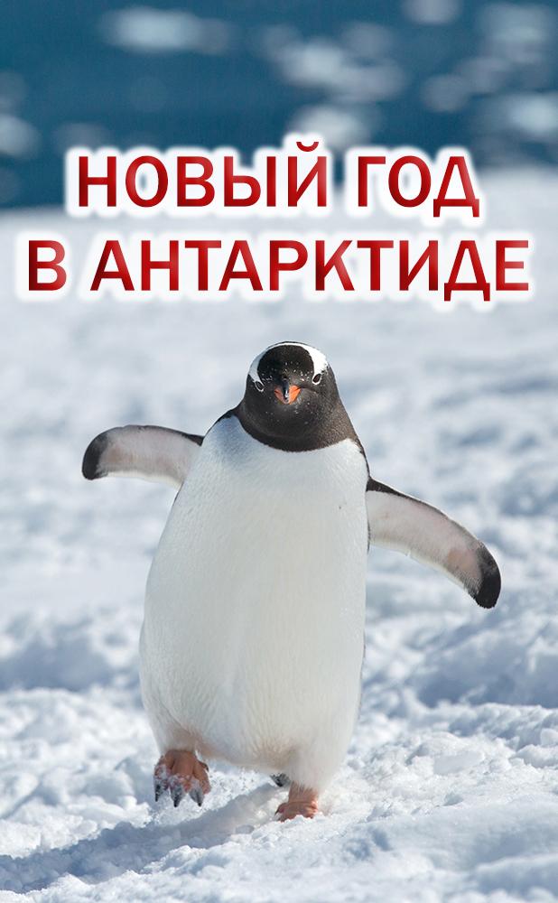 Новый год в Антарктиде 2019